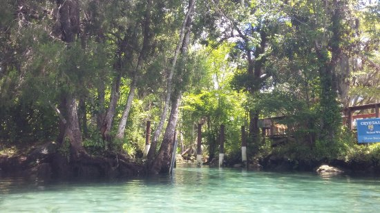 Crystal Lodge Dive Center: crystal river springs