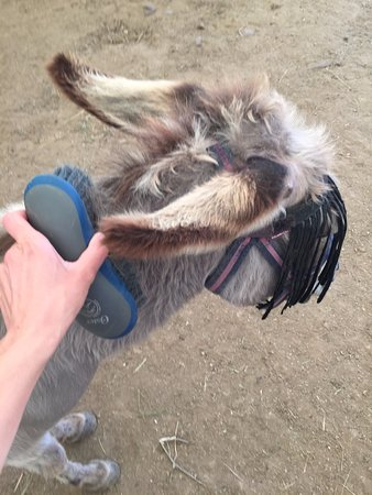 Brushing Kyra - Picture of Corfu Donkey Rescue, Paleokastritsa