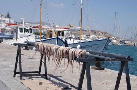 Pounta, Greece: Le vent en poulpe