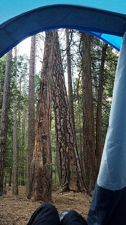 El Dorado, CA: From Inside My Tent