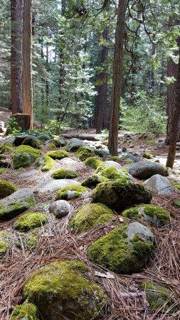 Ελ Ντοράντο, Καλιφόρνια: Camp Ground