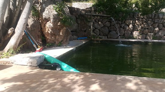 Untidy outdoor area, dirty water - Picture of Son Viscos