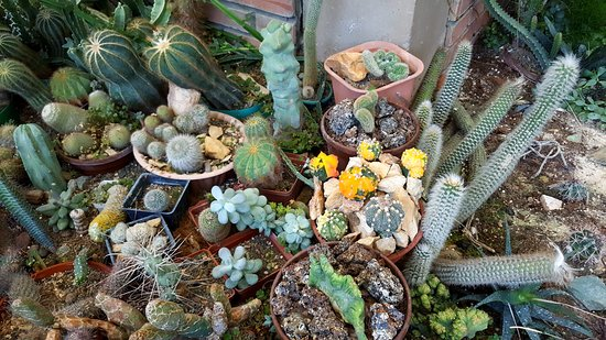 jard n de cactus picture of jardin exotico kamala. Black Bedroom Furniture Sets. Home Design Ideas