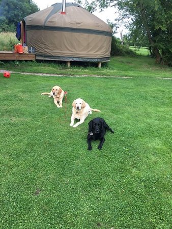 Longhope, UK: Happy Glamping Dogs