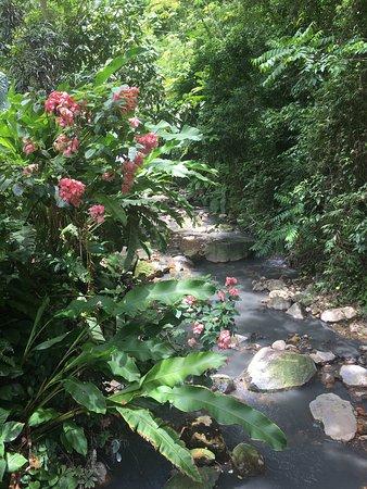 Diamond Botanical Gardens: photo0.jpg