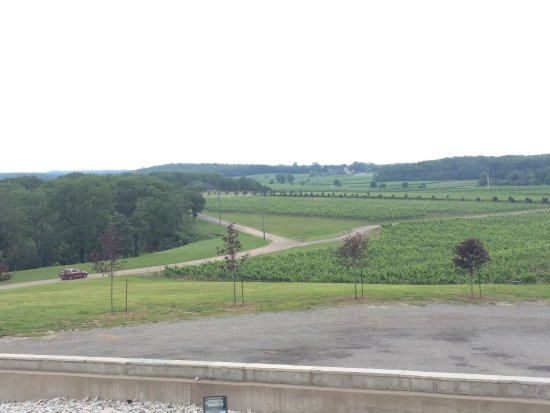 Tawse Winery: photo1.jpg