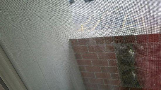 เมทูเอน, แมสซาชูเซตส์: This is the window. you can see the dirty mouth prints in the middle of window