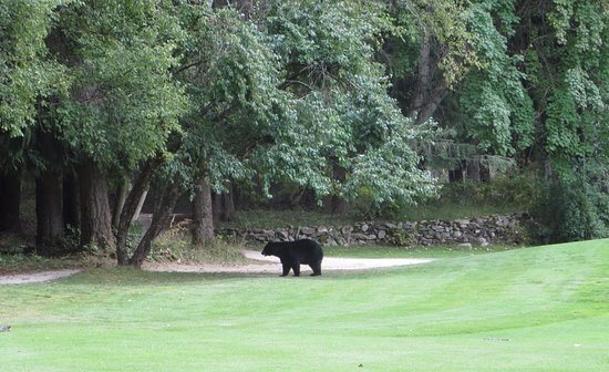Crawford Bay, Καναδάς: Bear hazard on the 4th hole !!