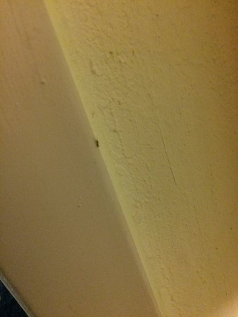 Hampton Inn Gaffney: ant. Hard to take because they walk so fast. This is at the door