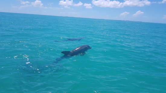 Wild About Dolphins: 20170727_120901_large.jpg