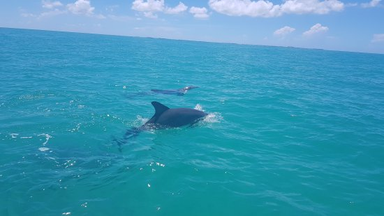 Wild About Dolphins: 20170727_120901(0)_large.jpg