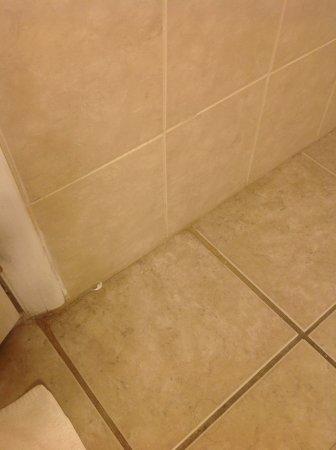 The Freeport Inn and Marina: Dirt, old tissue on floor in bathroom