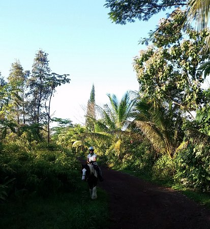 Kapoho, HI: My trail ride with Silver Crest Farms