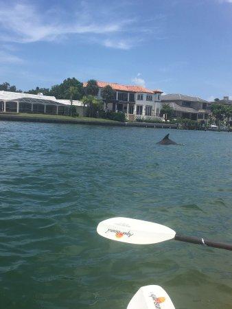 Sea Life Kayak Adventures: photo0.jpg