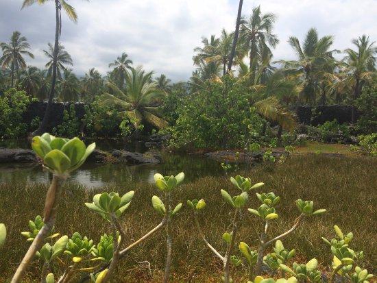 Honaunau, Hawaje: random photo of the sacred land
