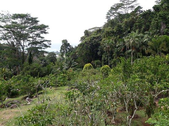 Isola di Mahé Picture
