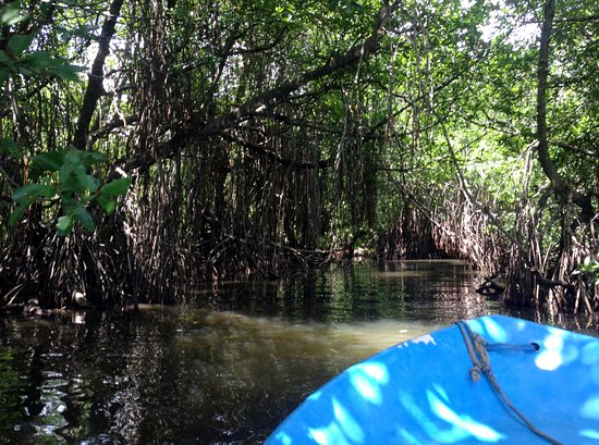 Boat ride through the natural mangrove caves in the Bentota river.