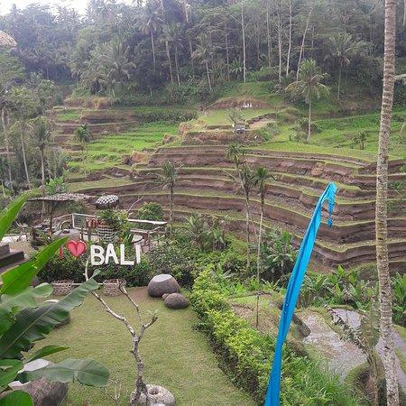 Tulamben, Indonesia: Tegallalang rice terrace