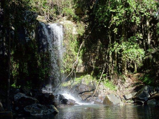 Tamborine Mountain, Australia: Curtis Falls