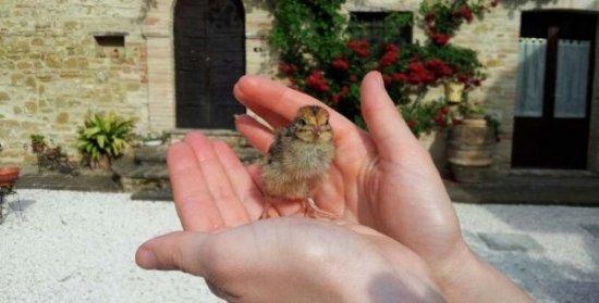 Petrignano d'Assisi Photo