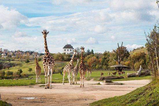 Ζωολογικός Κήπος Πράγας