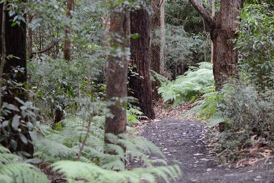 Illawarra Grevillea Park