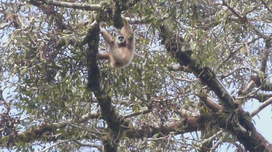 Blangkejeren, إندونيسيا: Rainforest Lodges Kedah Trekking
