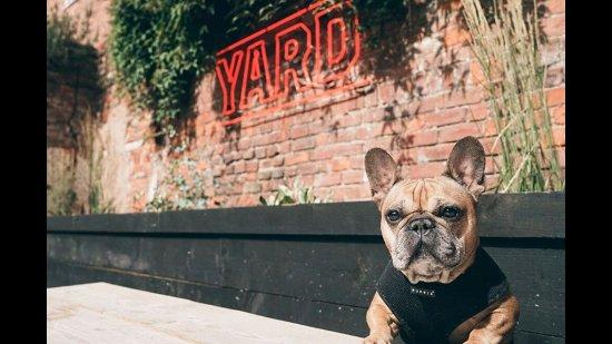 Dog Friendly Cafe Worcester