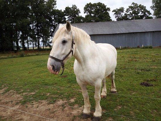 Yvetot, Prancis: cheval de trait de la ferme