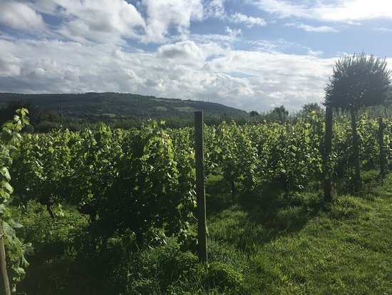 Mumfords Vineyard