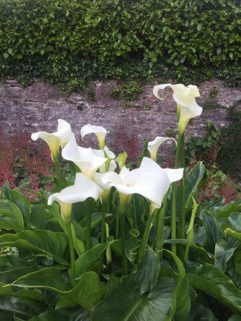 Muckross House, Gardens & Traditional Farms: Havens blomster