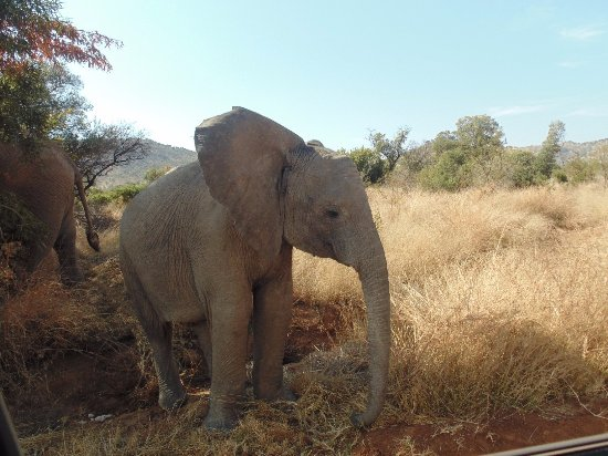Pilanesberg Safaris and Tours: Young elephant