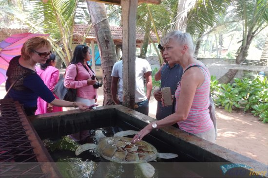 GARI Tours: Kosgoda Turtle Hatchery - Sri Lanka