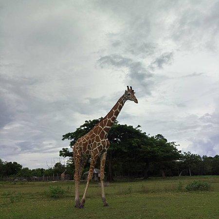 Busuanga Island, Filipina: IMG_20170711_213303_673_large.jpg