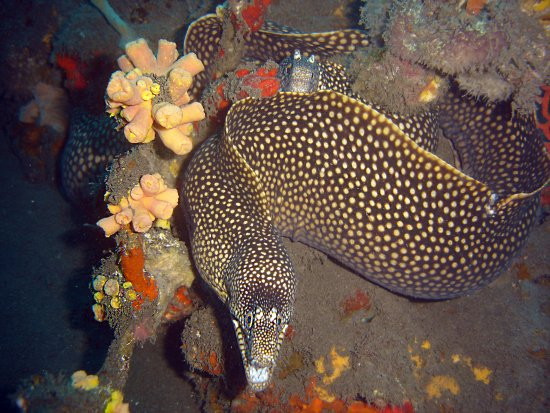 Sao Tome Island, Σάο Τομέ και Πρίνσιπε: underwater life