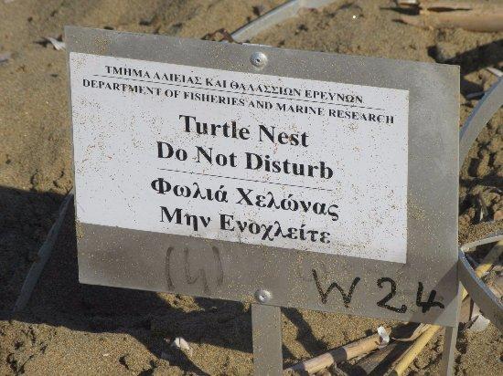Paphos District, Cyprus: Не копай!