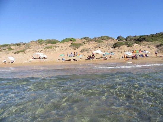 Paphos District, Cyprus: Чистейшая вода Лара Бич... Хочу туда!