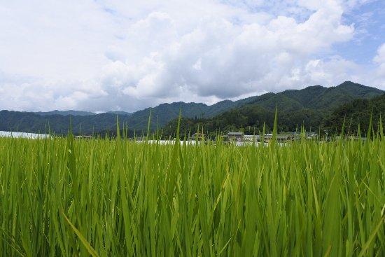 Satoyama Experience : photo0.jpg