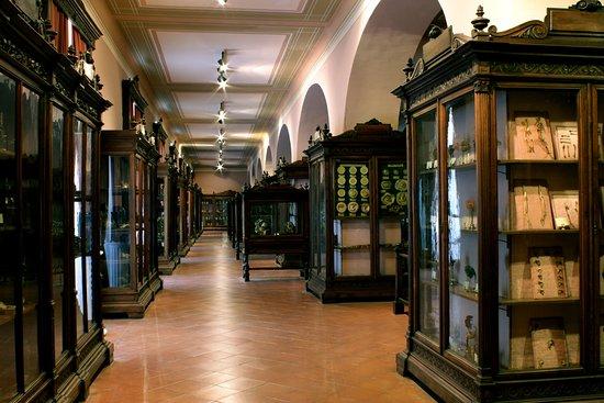 MUSA - Museo Universitario delle Scienze e delle Arti