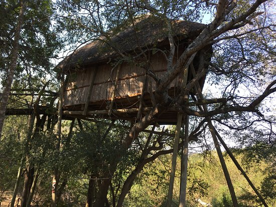 Marc's Treehouse Lodge: One of the Treehouse units.