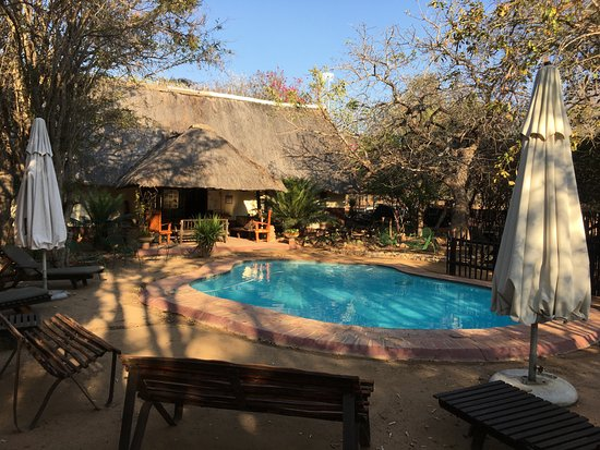 Marc's Treehouse Lodge: The Pool and Bar beyond...
