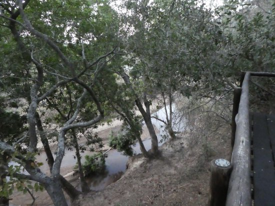 Marc's Treehouse Lodge: View of the River from House 3