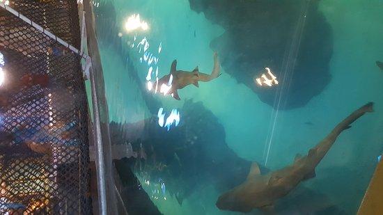 Adventure Aquarium: Shark tank with bridge exhibit
