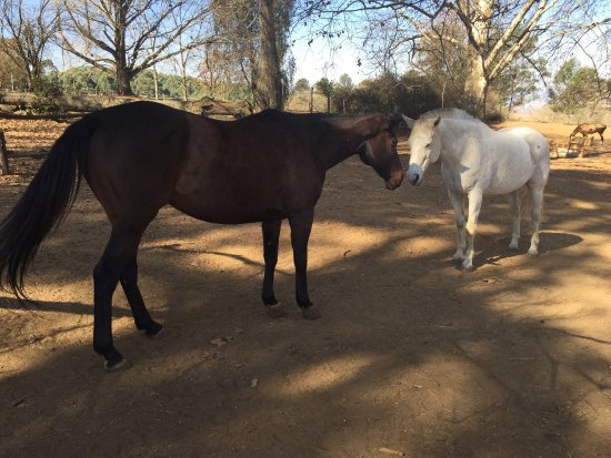 Lidgetton, South Africa: Beautiful horses at The Waffle Inn