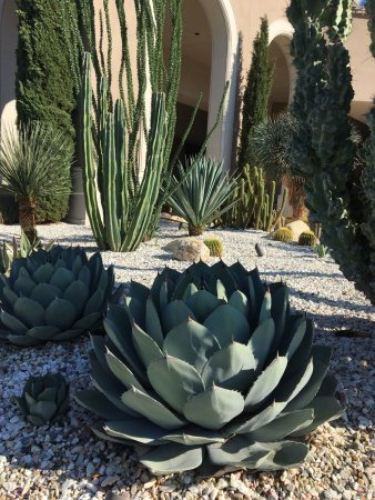 The Westin La Paloma Resort Spa Photo