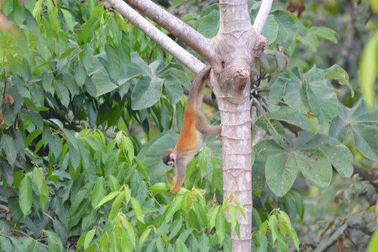 Villas Nicolas : Singe écureuil dans les arbres à droite!