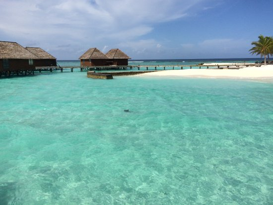 Veligandu Island Resort & Spa: That shadow in the middle is an eagle ray