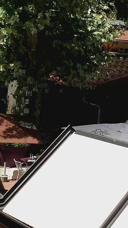 AU VIEUX PORT : tres ombragé cette grande terrasse avec ses énormes platanes