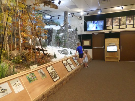 Ely, MN: Inside Museum