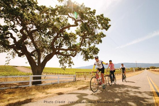Santa Barbara Wine Country Cycling Tours: Enjoying vineyard views on Happy Canyon